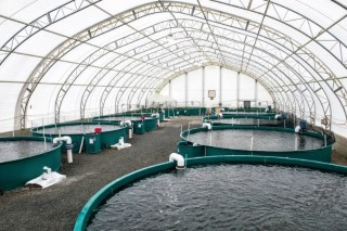 recirculation aquaculture